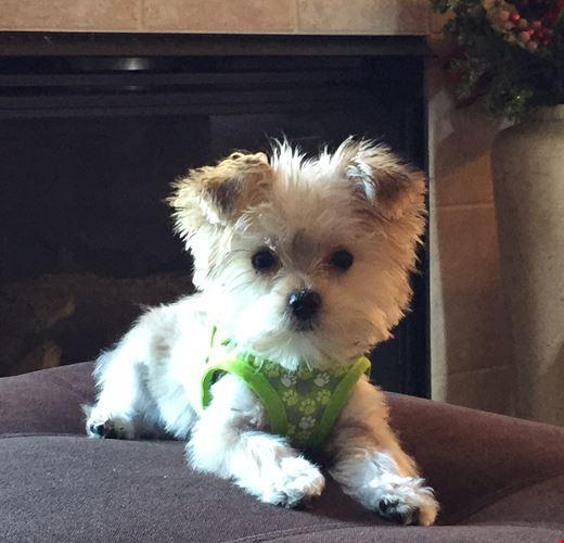 Premier Pups Reviews | Let's dive into our customers